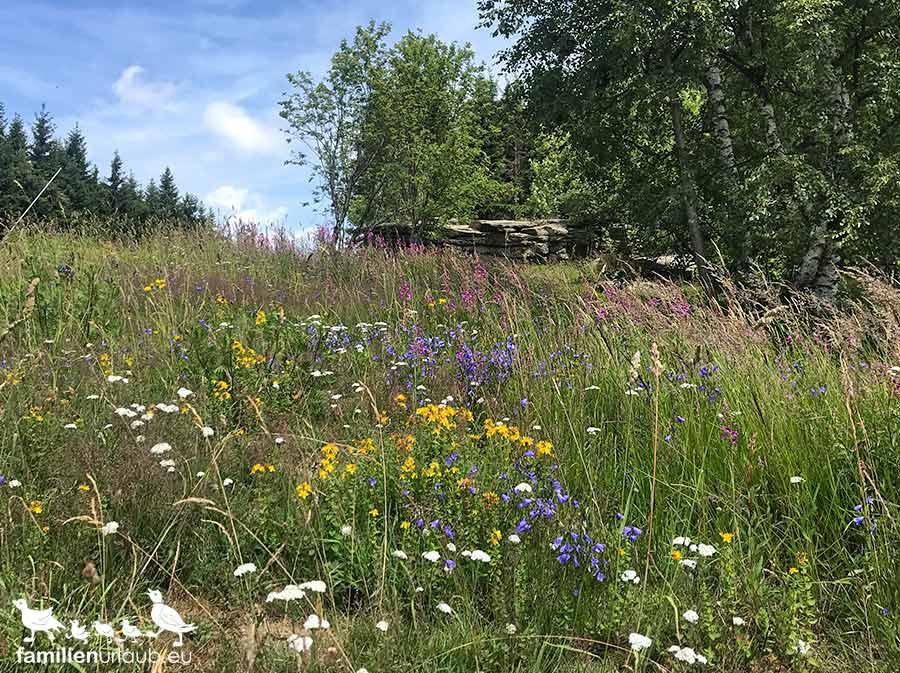 Blumenwiese Harz