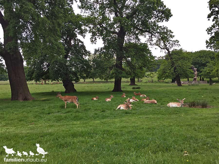 Tiere Richmond Park London