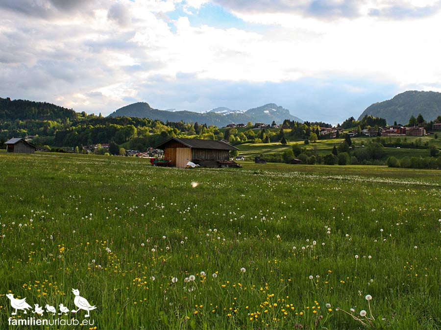 Wiese in Oberstdorf