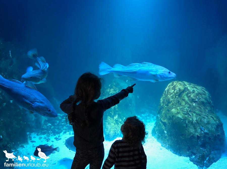 Kinder Aquarium