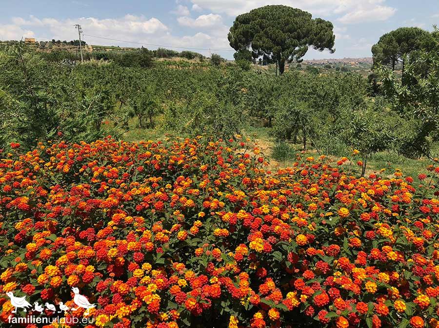 Sizilien Blumen
