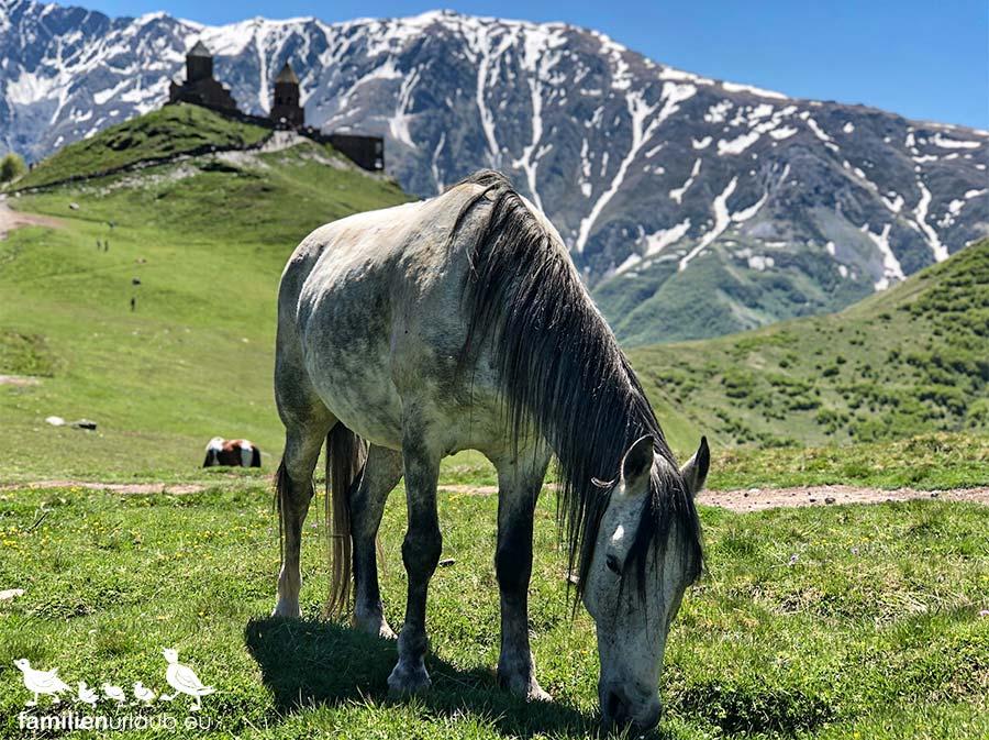 Pferd in Georgien