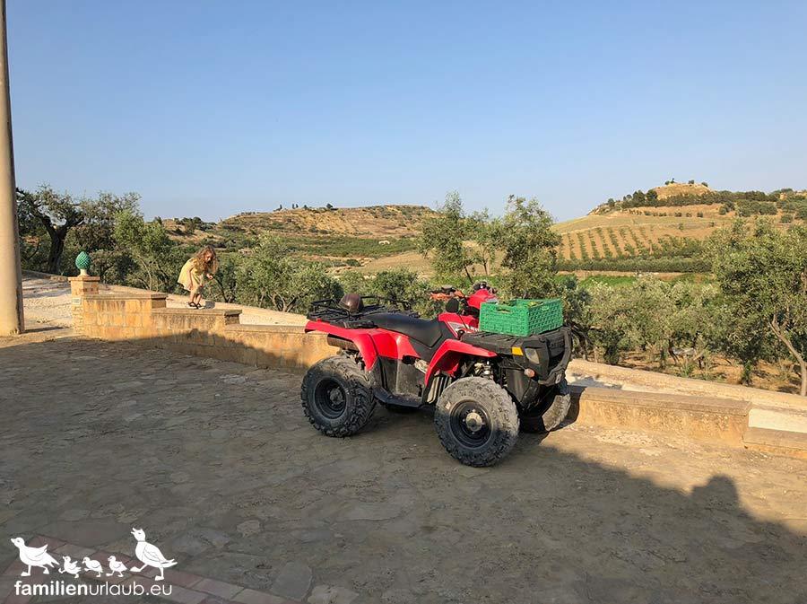Olivenbäume Sizilien
