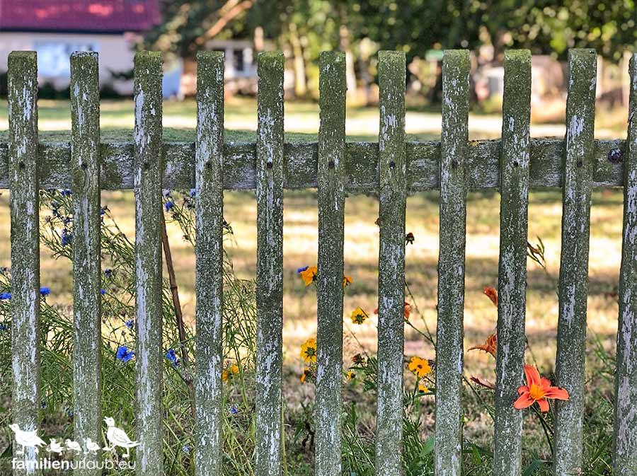 Zaun Blumen